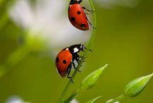 Természet Natura