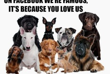 Rescues / Support your local rescue shelter! We do! / by For Tails Only~Changing Lives one Paw at a time.