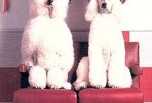 Pies i Kot w Mieście