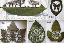 Diy (Blätter)