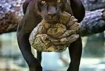 veľké zvieratá...