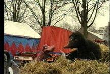 Circus kleuters