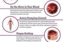 Effects of cholesterol on the body