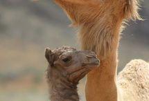 Mamães e seus filhotes