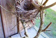 Birds, Bird Houses & Bird nests / by Jennifer Baggerly- Milligan