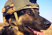 Military Hero Dogs