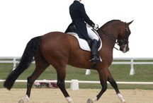 Dressage / by Debbie Walkinshaw