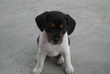Tucker & other cute animals. / My puppy Tucker - a jack russell/beagle mix.  And lots of other cute aminals! / by Molly Smith