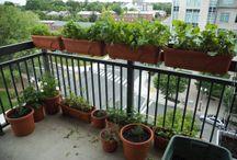 Container Gardening Thailand / Container Gardening Thailand - Small Space Garden