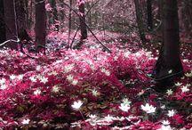color my world pink / by Sania-lehua Pedro