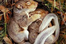 squirrelies