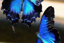 Farfalle e fiori / Un connubio perfetto
