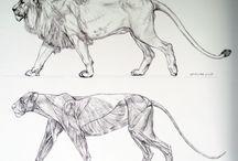 animal tutorial&anatomy