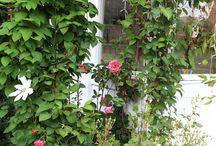 Dom na wsi / wieś, ogród na wsi