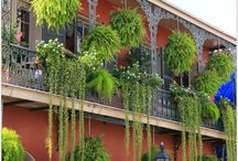 New Orleans Bayou style plants