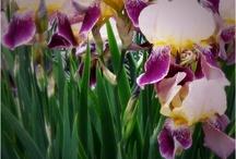 Flora & Plants / by Eileene