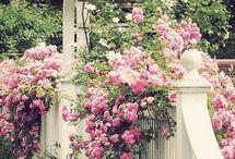 Uziemiona / ogrodnictwo