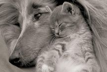 So sweet / Dogs, puppies, cats & kittens