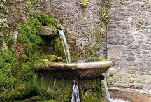 Gotland trädgård