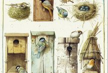 Птицы. Birds.