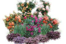 Сад__цветы