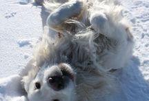 Vår hund