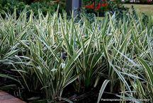 Understorey plants