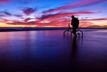 Cycle / by Beth Cutler Lloyd