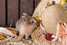 Akcesoria dla królików