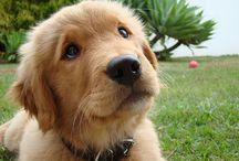 puppy love / by Deborah M