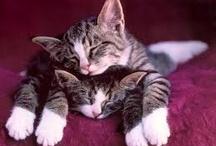Sleepy Kitties / by Tamye Machina