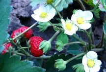 Garden Harvest / What to do with your garden harvest!  / by Carrie Mulcahy