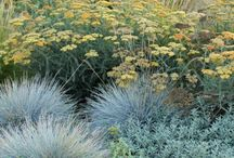 Grass landscaping ideas
