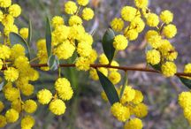 Natives for Wamboin / Plants suitable for the upper Murrumbidgee catchment area