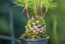 ağaç yetiştirmek