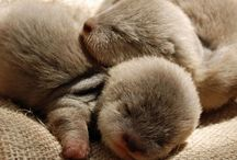 Outstanding Otters