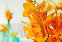 Belleza en Naranja