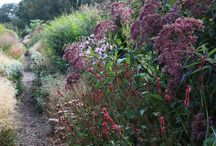 Natuur - vogels - vlinders - bloemen - planten en nog veel meeeeeer