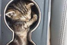 Katze ♡