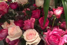 Bloem rozen / roses