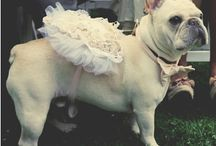 Wedding Pets / Pets are part of the big day!