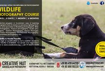 Wildlife Photography Course / Creative Hut Is offering  six months diploma in Wildlife Photography