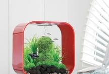 biorb life led aquarium fish tank designs