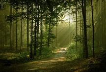 Enchanted Forest / by T W