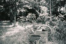 Vieux arrosoirs et vieilles bassines / Au fond près du vieux bassin
