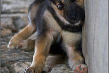 kis kutyák