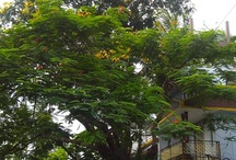 trees infront of  house