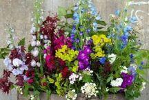 virágok,kertészet