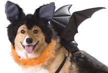 Halloween Costumes for Pets / Halloween Costumes for Pets - because OMG!  #SuperCute #Halloween #Dogs