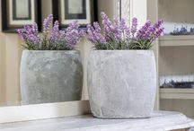 Healthy air indoor plants